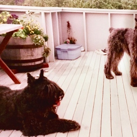 Cape Cod Vacation House Bouviers des Flandres Dogs on Deck